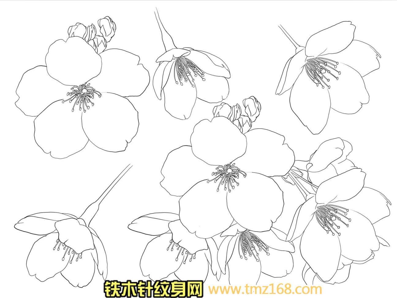 樱花桃花香澳白描精品纹身手稿定制武汉纹身铁木针